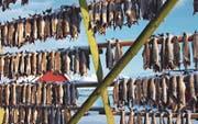 Der Skrei hängt zum Trocknen an der Stange. Wegen ihres immensen Kabeljau-Reichtums hiessen die Lofoten früher Stockfischarchipel.