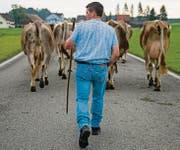 Das Edelweiss-Hemd muss bei der Viehschau der Gemeinde Sennwald in Zukunft zu Hause bleiben. (Bild: Coralie Wenger)