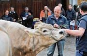 Martin Preisig begutachtet an einer Zuchtfamilienschau die Kühe. (Bild: Donato Caspari)