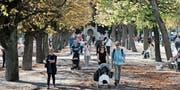 Für viele Junge ist Zürich attraktiver als St. Gallen. (Bild: Ennio Leanza/Keystone (Nähe Bürkliplatz, Oktober 2014))