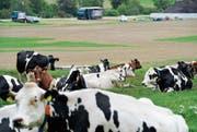 Das Land von Landwirt Jörg Herzog in Niederwil ist nach den Motocross-Rennen wieder topfeben. (Bild: Donato Caspari)