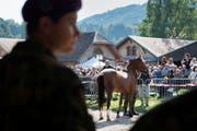 Mehrere Pferde im Armee-Tier-Kompetenzzentrum in Bern sind an Druse erkrankt. Die Druse ist eine Pferdekrankheit, die durch ein Bakterium verursacht wird und sehr ansteckend ist. (Bild: ANTHONY ANEX (KEYSTONE))