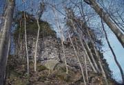 Die Feinde der Burg Frischenberg – Efeu und Bäume – gewinnen Überhand und werden darum zurückgeschnitten. (Bild: Werner Heeb)