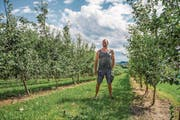 Obstbauer Thomas Burren zwischen seinen Quittenbäumen in Chressibuech. (Bild: Thi My Lien Nguyen)