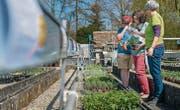 Biogärtnerin Madlen Neubauer (rechts) berät in ihrer Gärtnerei in Erlen zwei Kunden, die Freude daran haben, Kräuter selbst anzupflanzen. (Bild: Reto Martin)