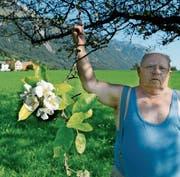 Ungewöhnliche Apfelbluest im Hochsommer (Bild: Hansruedi Rohrer)