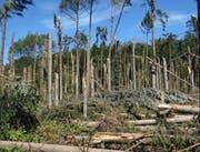 Insgesamt sind im Thurgau 15'000 Kubikmeter Holz umgeworfen worden. (Bild: pd)