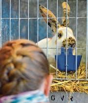 Kleintierschau: Hoppel ist ganz Ohr (Bild: Max Eichenberger)