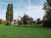 Die grosse Wiese neben dem Freibach wird eingezont. (Bild: Jolanda Riedener)