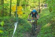 Der Elitebiker Simon Vitztum aus Thal zeigt wie es geht und fährt auf einem legalen Trail durch den Wald. (Bild: Christof Sonderegger)
