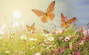 Blumen sind Bilder des Lebens: Zwischen dem Erwachen der Natur und dem Aufblühen der Seele besteht ein enger Zusammenhang. (Bild: Shutterstock)