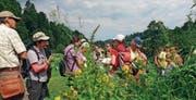 Spannende Kräuterkunde und Tipps auf der Wanderroute im Neckertal. (Bild: Walter Ferrari)