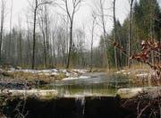 Im Schaarenwald. Holz aus Thurgauer Wäldern wird bereits als Rohstoff für die Gewinnung von erneuerbarer Energie genutzt. (Bild: Stefan Borkert)