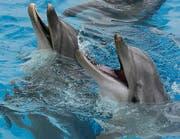 Um sie dreht sich der Streit: Delphine im Connyland Lipperswil. (Bild: pd)