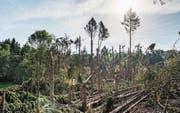 Der Gewittersturm Anfang August lieferte dem Borkenkäfer Nahrung und Brutstätten. Im Bild Schäden bei Hüttwilen. (Bilder: Thi My Lien Nguyen)