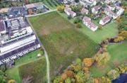 Auf dieser Wiese in der Äusseren Stammerau sind in zwei L-förmigen Gebäuden rund 100 Wohnungen geplant. (Bild: Olaf Kühne)