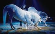 Géraldine Knie mit ihren Pferden in der Zirkus-Manege. (Archivbild: Benjamin Manser)