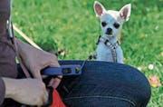 Neues Brevet: Kurse für Hund und Besitzer. (Bild: Reto Martin)