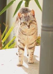 Wer eine Katze füttert, der ist für sie verantwortlich. (Bild: fotolia)