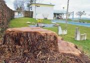 Eine Reihe von Bäumen, wie diese Weide, mussten im Gebiet des Strandbads gefällt werden; der Strunk dient als Sitzbank.