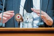Daniel Brelaz (Grüne/VD) outete sich im Parlament als Katzenfan. (Bild: PETER KLAUNZER (KEYSTONE))