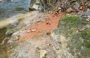 Eine rote Brühe fliesst in die Aach, wo das Leben nur langsam zurückkehrt, nachdem im letzten Herbst wiederholt Gülle eingeleitet worden ist. (Bild: Markus Schoch)