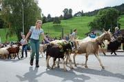 Die Ziegenherde vom Malschüel machte sich am Samstag auf den Weg ins Tal (Bilder: Corinne Hanselmann)