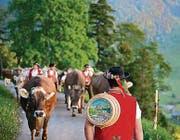 Reportage Alpsommer: Alpaufzug (Bild: Urs Bucher (Urs Bucher))