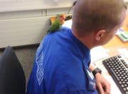 In aller Ruhe schaut der Papagei dem Polizisten bei der Arbeit zu. (Bild: Screenshot Kapo TG)