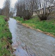 Der Giessenbach fliesst aus Weinfelden in die Landwirtschaftszone. (Bild: Nana do Carmo)