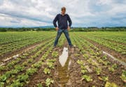 Wasser steht zwischen den Salaten: Gemüseproduzent Ralph Bötsch auf einem seiner Felder. (Bild: Reto Martin)