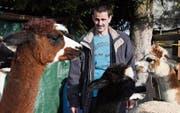 Alpakahalter Erwin Allenspach mit seinen Tieren. (Bild: Yvonne Aldrovandi-Schläpfer)
