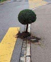 Dieser Baum wurde am Sonntagmorgen an der Oberdorfstrasse in Herisau gesichtet. (Bild: PD)