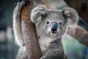 Bild: WWF Schweiz