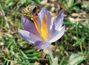 Frühlingserwachen in Azmoos (Bild: Balser Fried)
