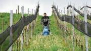 Winzer Benno Forster mäht das hohe Gras zwischen seinen Rebstöcken, um dem drohenden Frost entgegenzuwirken. (Bild: Mario Testa)