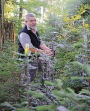 Ernst Ammann in einem verjüngten Waldstück. (Bild: Olivia Hug)