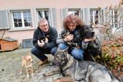Die Langs mit Mischling Stella, den Chihuahuas Admiral, Gioia und My Ruby, den Schäferhunden Ingo vom Rothaarpark und (liegend) Contra von der Bachhöhle. (Bild: Donato Caspari)