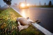 In Mels begingen zwei Autofahrer nach einem Wildunfall Fahrerflucht. (Bild: DPA)
