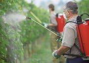 Rund 60 Prozent des Fungizidverbrauchs gehen in Europa auf Kosten des Weinbaus. Selbst im ökologischen Weinbau müssen Winzer regelmässig Kupfer- und Schwefelpräparate spritzen. (Bild: Javier Larrea/Getty)