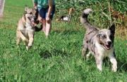 Hunde lieben es, in der Natur herumzutollen. Die Tierhalter sind dafür verantwortlich, dass es dabei nicht zu Problemen kommt. (Symbolbild: PD)