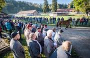 Versteigerung: Angehörige der Armee führen in der Kaserne Sand in Schönbühl bei Bern jedes der zu verkaufenden Pferde von Ulrich K. vor den Augen der Interessierten vor.Bilder: Reto Martin (Bild: Reto Martin (Reto Martin))