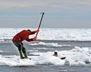 Das Töten von Robbenbabys hat in Kanada dieses Jahr noch früher begonnen. (Bild: Fondation Weber/PD)
