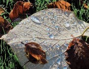 Schmuckstück in Nachbars Garten (Bild: Fritz Schneider)