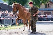 Auch dieses Pferd aus dem Bestand von Ulrich K. wurde verkauft. (Bild: ANTHONY ANEX (KEYSTONE))