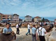Eine Viehschau mit Seeblick (Bild: Gianni Amstutz)