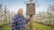 Obstbauer Hans Bischof auf seiner Kirschplantage, wo die Mauerbienen in den «BeeFarmer»-Nistkästen wohnen. (Bild: Urs Bucher)