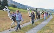 Nach der Znünipause auf dem höchsten Punkt des Trekkings – im Wildhauser Oberdorf – geht es nun bergabwärts und nach Hause. Zuvorderst läuft Sarah mit Lama Kurt, der die Verpflegung trägt.