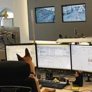 Der Polizeihund «Jasper» als neuer Schwarzfahrer-Schreck. (Bild: Stapo SG)