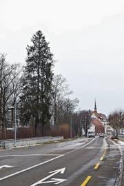 Die Holzung betrifft an der Q20 den Abschnitt zwischen dem Gerichtsgebäude und der Autobahn A1. (Bild: Roman Scherrer)